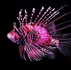 Aquarium Webcam