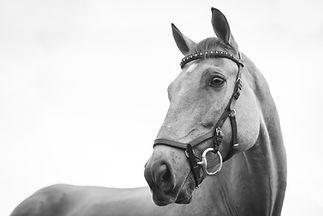 Bien-être cheval