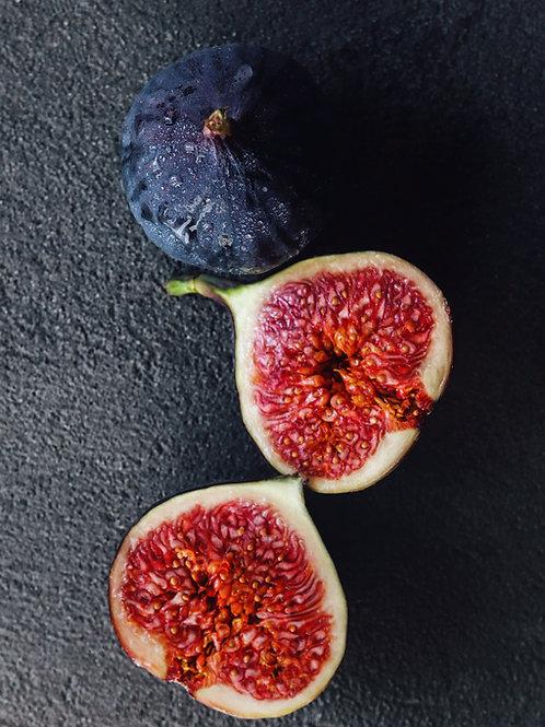 Fig + Moss