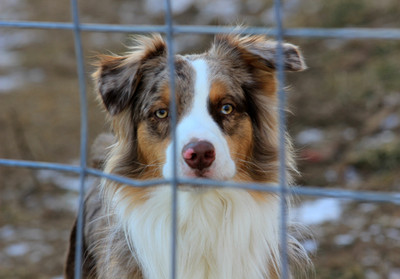 What you need to know about adopting a rescue dog.