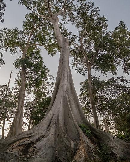 Image by Surya Prakosa