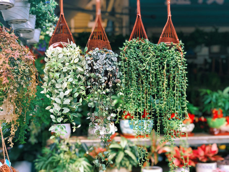 Flowering Plants as Gifts