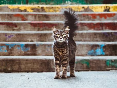 Cat Vaccination 101
