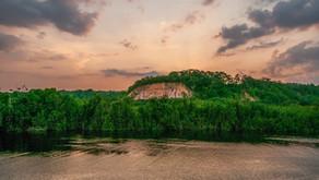 Deforestation Destroys Habitats in the Amazon