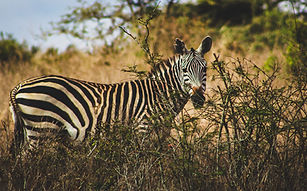 Image by Wanyoike Mbugua