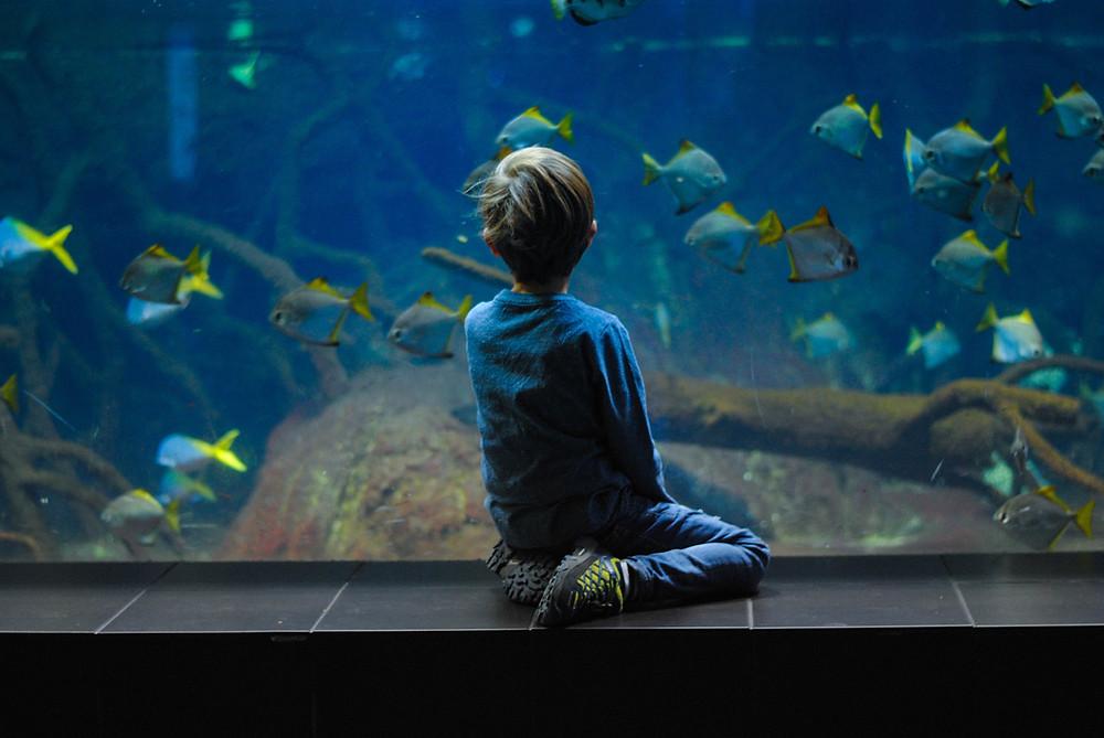 A little boys looks into a giant aquarium a some colourful fish
