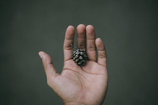 Image de Adib Harith Fadzilah
