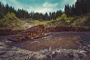Image by Ales Krivec