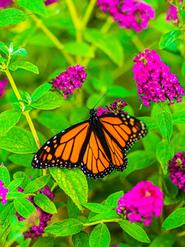 How to Attract Butterflies and Pollinators to Your Garden
