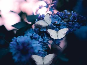 de vanzelfsprekende alliteratie van het verzamelen van vlinders