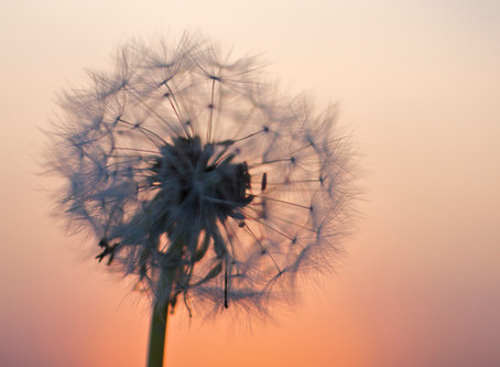 Weeds: The Best Kind!
