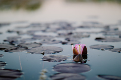 Mindfulness, the Warriors Way