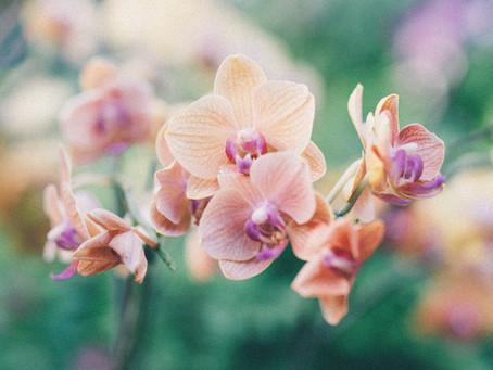 La fine fleur de la botanique : L'orchidée