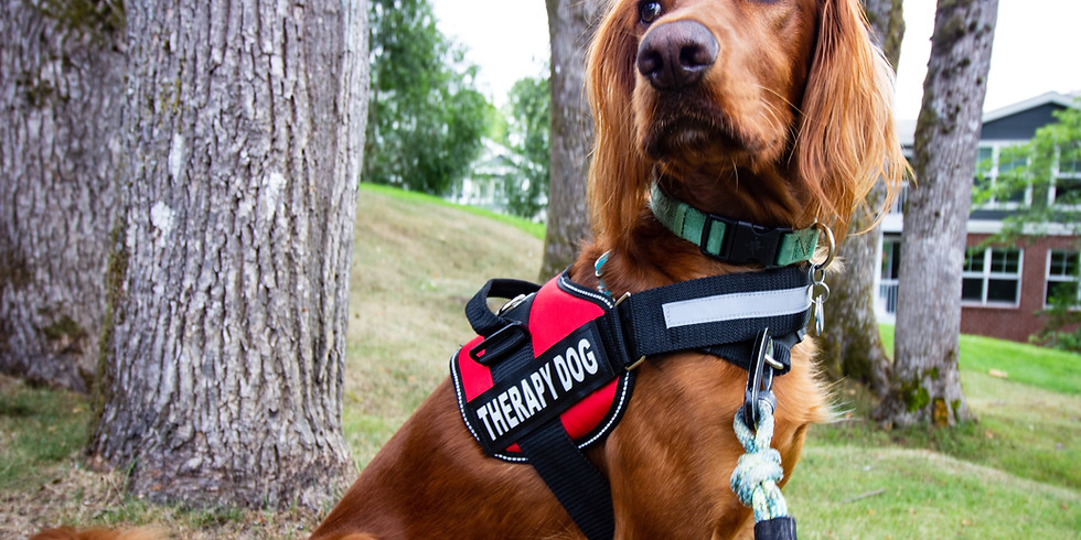 Level 3/4 Group Class: CGCA/Therapy Dog Prep
