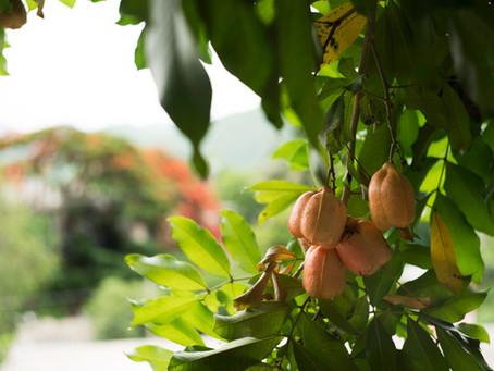 How Climate Change is Affecting Jamaican Agriculture