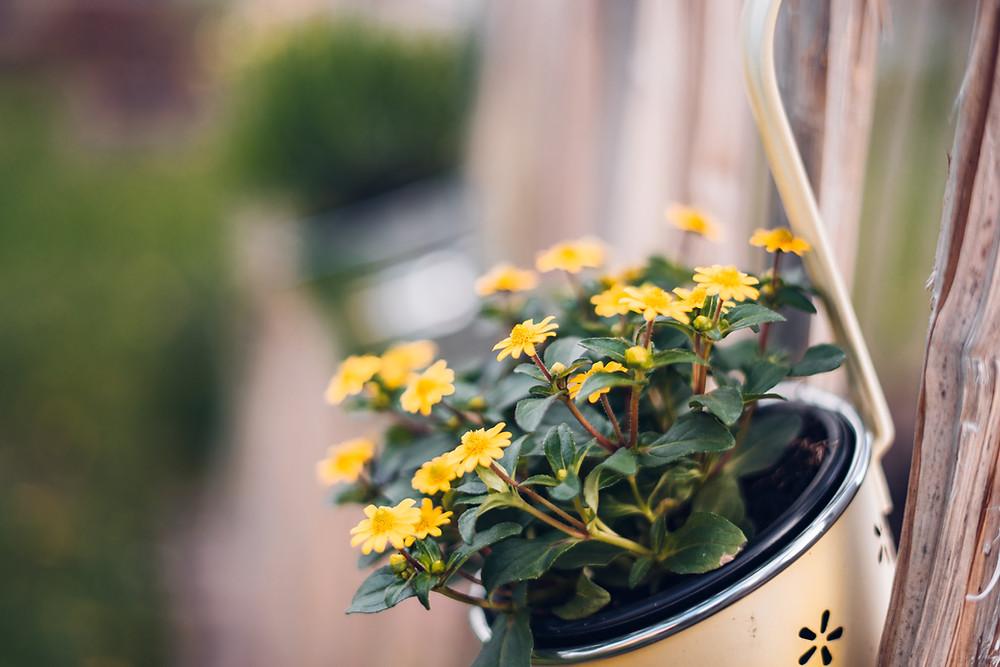 Gardening ideas, 6 gardening tips
