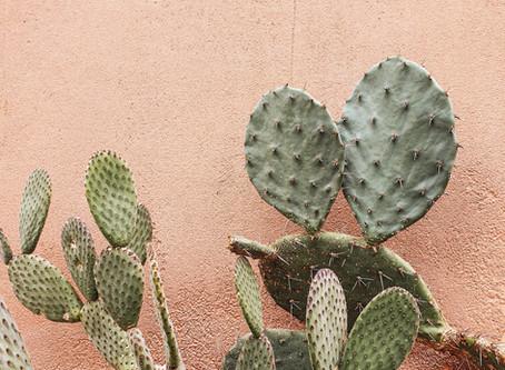O Cactus Gil