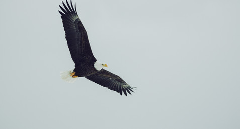 Thought For The Week - On Eagles Wings