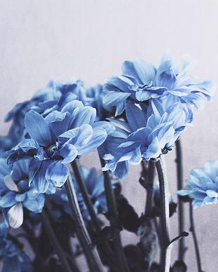 Image by Veronika Koroleva