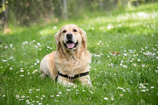 happy dog relaxing at coaching canine companions