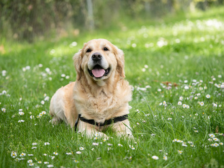 Stress Awareness Month - How mindful dog walks can benefit you and your dog