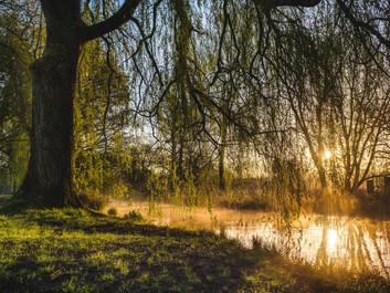Wat is wilgenbast - Salix Alba en waarom is hij zo krachtig?