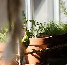 Picture of garden windows.