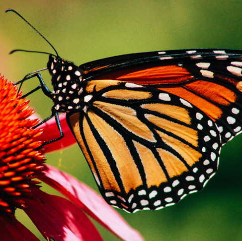 On Humility: The Lesson of the Butterfly