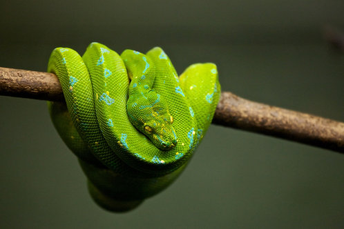The Science of Slithering
