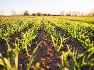循環農業:循環經濟結合新農業!