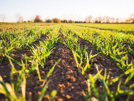 Negocios innovadores del sector agroalimentario
