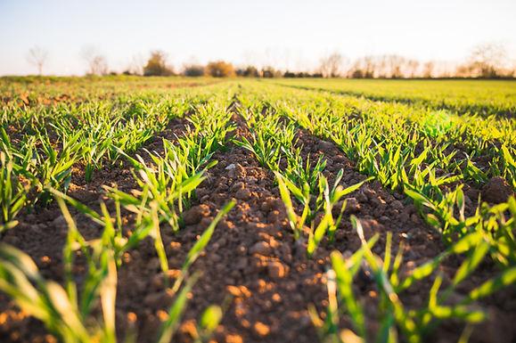 新項目!農業食品試驗計劃(Agri-Food Pilot)還有兩年時間接受申請!