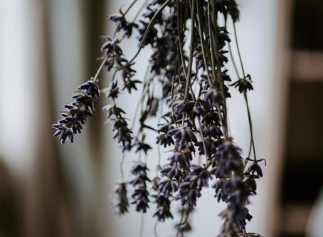 Lavendel Essentials oder warum wichtig ist, woher dein Lavendelöl kommt