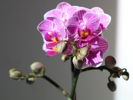 Orchidee in autunno