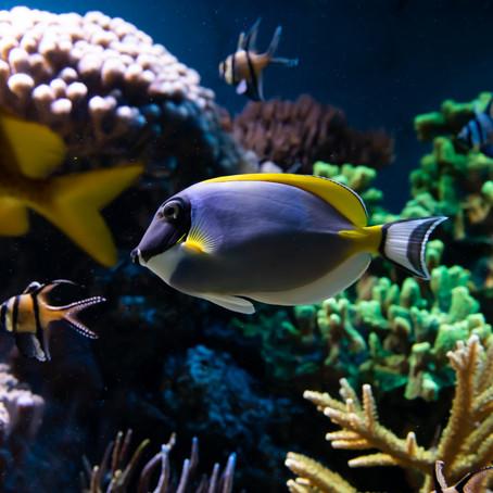 Raising Awareness for the Reef