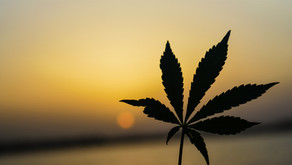 What some experts say about medical marijuana and CBD