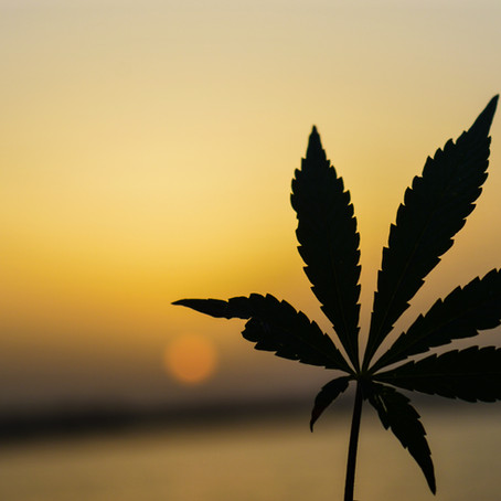 Tenth Circuit Rules that State Legal Marijuana Violates Federal Law