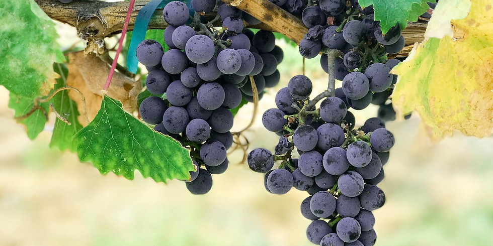 Wines of Italy hosted by Trinchero Wine Estates