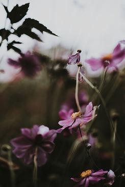 Image by Annie Spratt