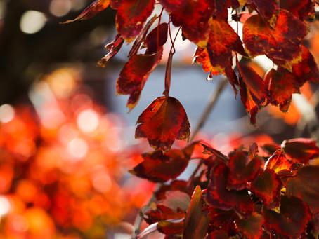 「英語で学ぶ大人の社会科]「論文の教室」& The Japan Times紙記事について議論する「朝英語の会@京阪神」2020年11月の予定&テーマ