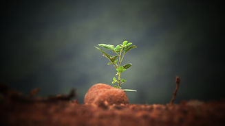 Nurture your future with coaching. Small plant growing from seed
