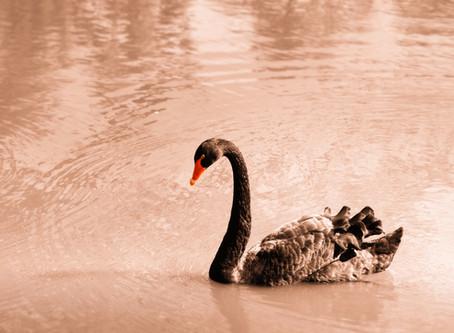 Cisnes negros y ríos revueltos