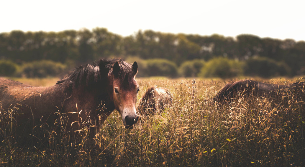 Horses listen to what is not spoken, to what lies in the heart, and refelct it back to us. They let us hear the longing for our soul.
