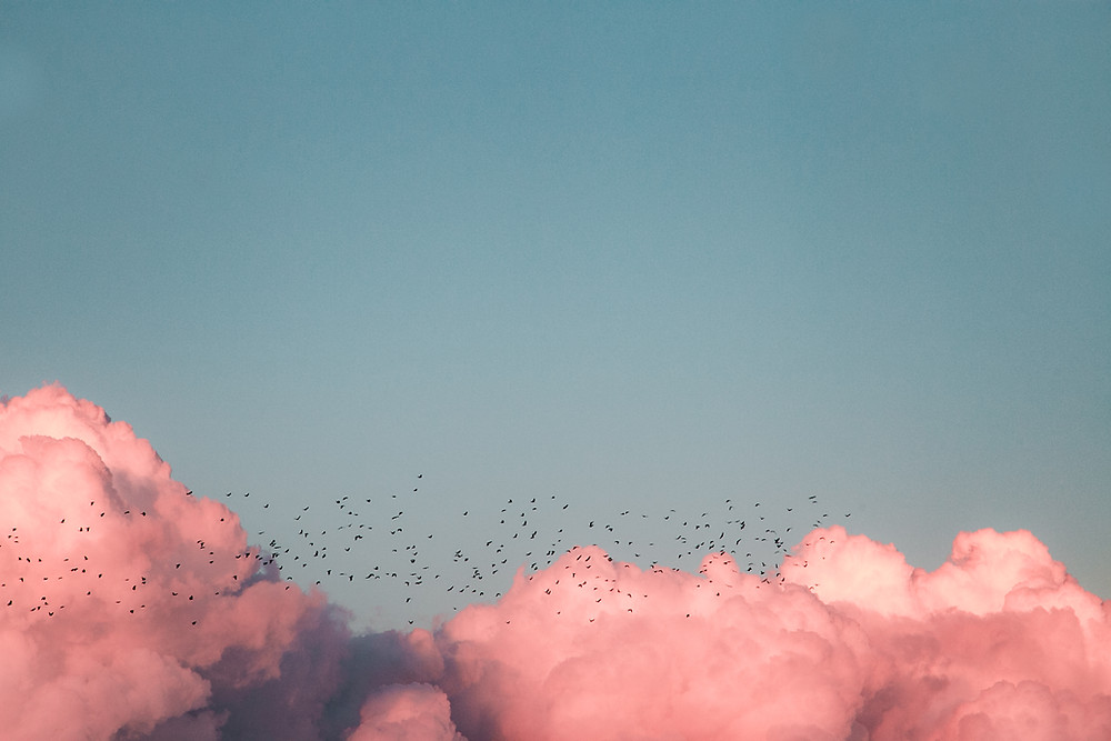 Pink clouds with birds in blue sky