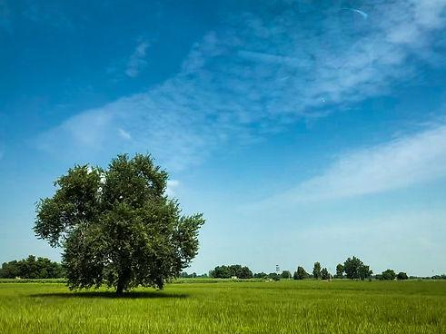 Image by Saagar Takhi