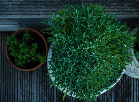Part 2: 9 Tips When Picking Pots & Plants to Match