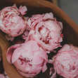 Flor Box OXO | Flower Meanings | Peony