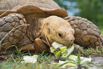 tortoise care guide