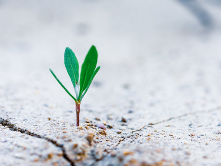 Cultivating a growth mindset when confronting change is simple, but not easy.