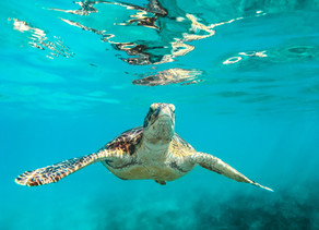 Good News For Endangered Sea Turtles and Mammals!